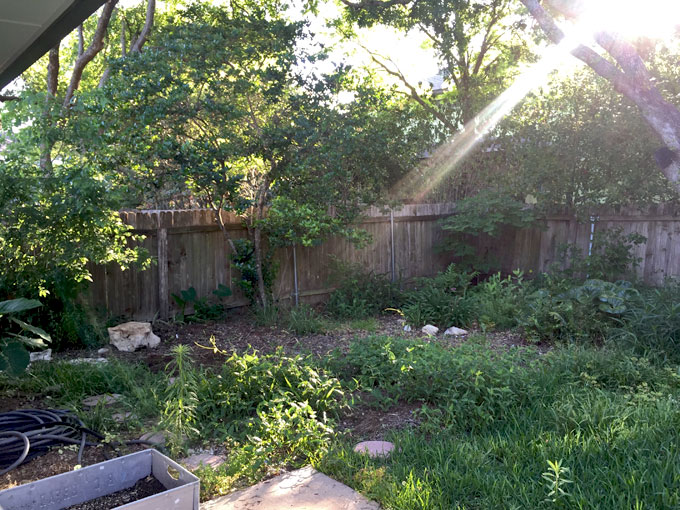 backyard-before1